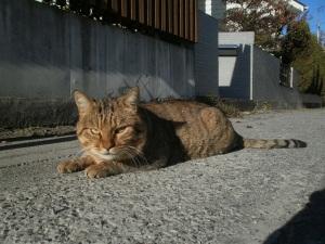 上長瀞駅近くの猫