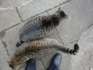 昼休みの猫